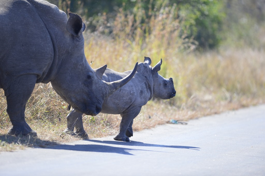 Leads 2 Business : Rhino love