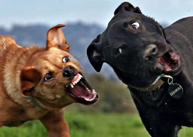 break-up-dog-fight-679x483